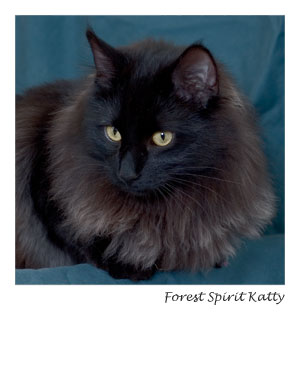 Forest Spirit Katty